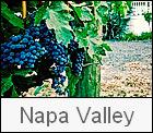 Napa Valley Wedding Gallery Thumbnail